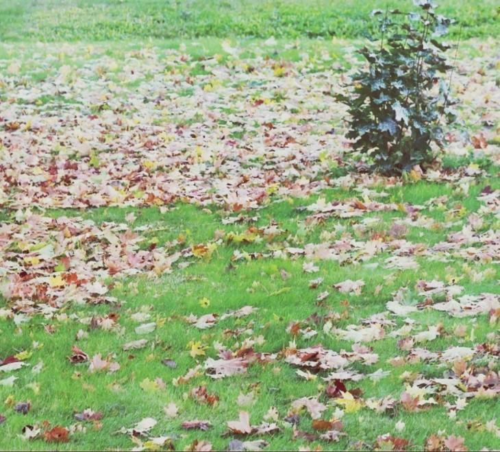 Lá rơi đầy trên nền cỏ.