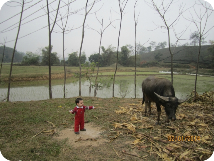 Having fun with the water buffalo? : D